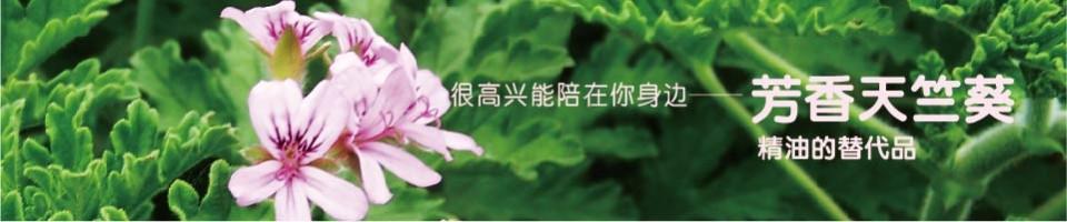 芳香天竺葵专题