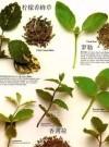 香草文化史 认识香草的变革