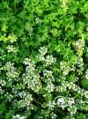 香草种植在休闲农业中的作用
