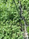 适合观赏香草的品种大全,赶快收藏吧!